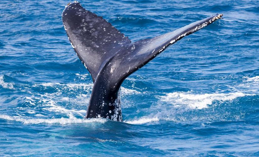 Grand Turk Cruise Shore Excursions | Whale Watching