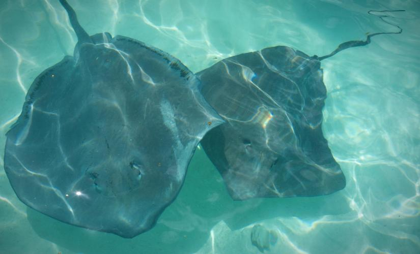 Caribbean Gibbs Cay and Stingray Encounter in Grand Turk