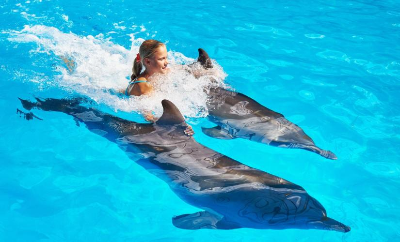 Dolphin Swim Along in Nassau and Island Tour