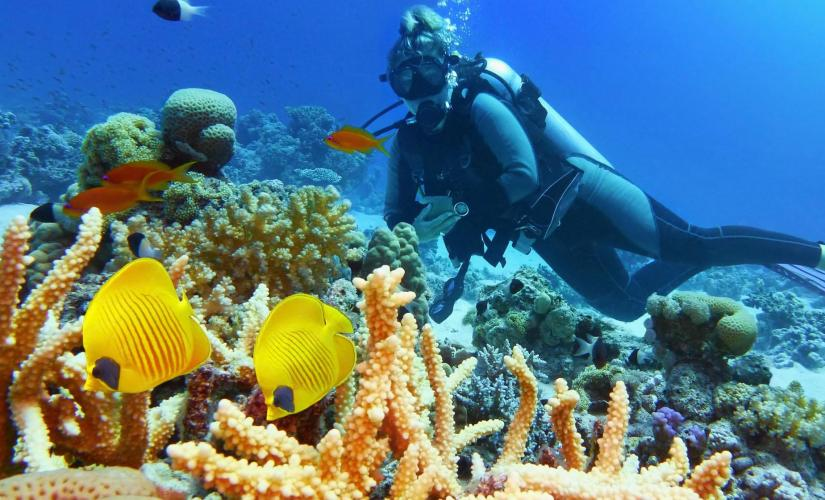 Two Tank Certified Dive (Gear Not Included) in Roatan (Meso-American Barrier Reef, Mayan Princess)