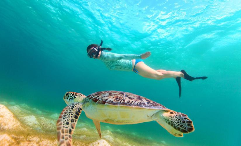 Snorkeling in St. Kitts (Reefs, Fish, Turtles)