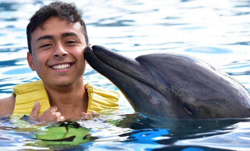 St. Kitts Shore Excursions | Dolphin Encounter