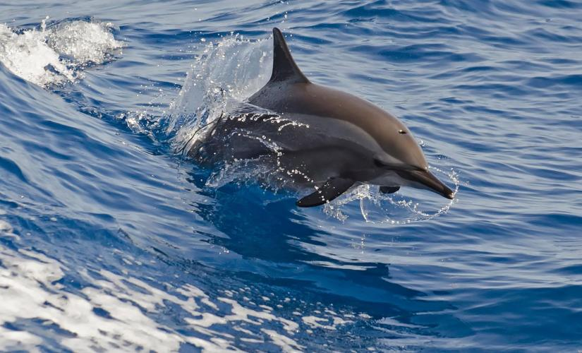 Whale and Dolphin Watching Safari