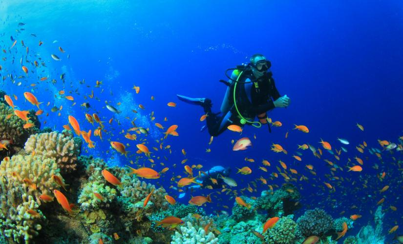 St. Thomas Small Group Certified Boat Dive Excursion with PADI Instructor