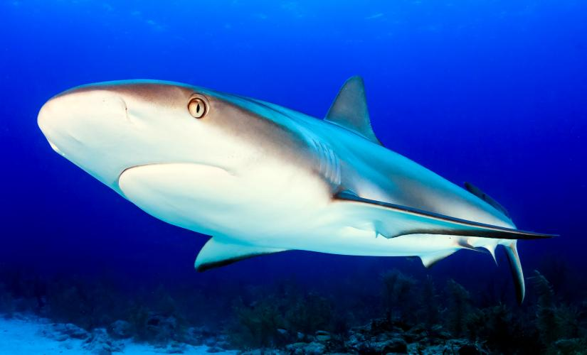 Shark Encounter, Coki Beach, and Coral World Tour in St. Thomas (Shark Shallows)