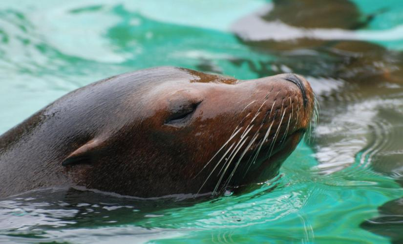 Sea Lion Encounter in St. Thomas in the Morning with Coral World Ocean Park Admission