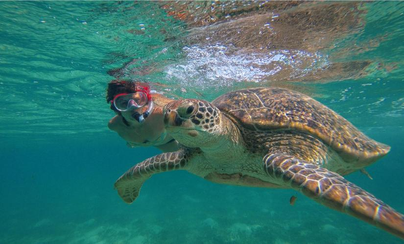 Half Day Snorkel with Turtles at Marine Sanctuary in St. Thomas