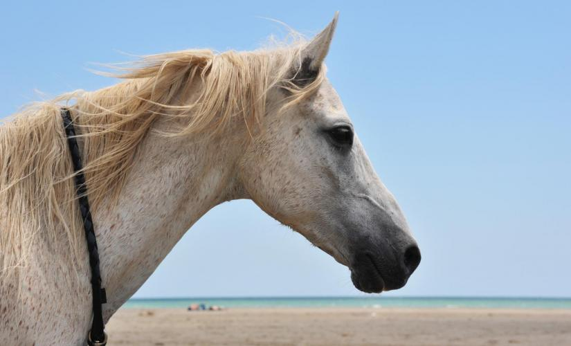 Horse Back Riding by the Beach