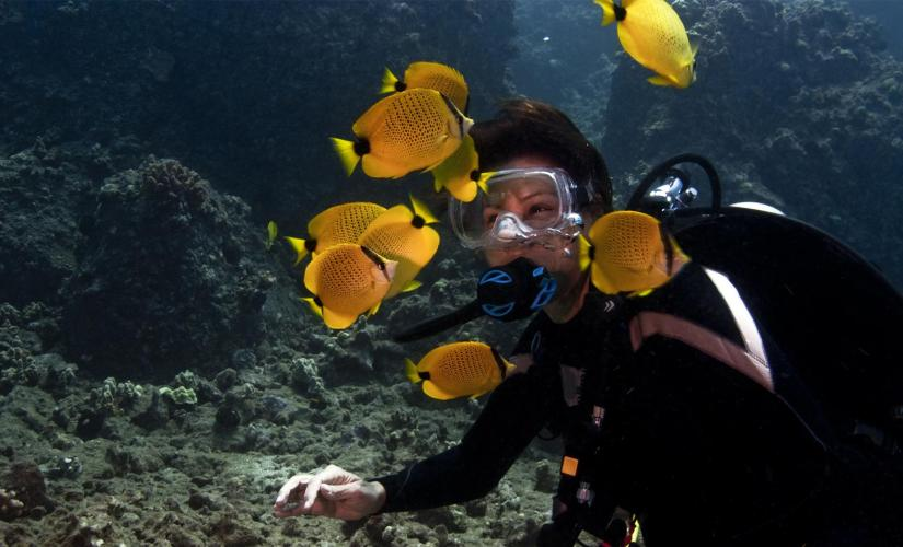 Scuba Beach Dive Tour in Lahaina