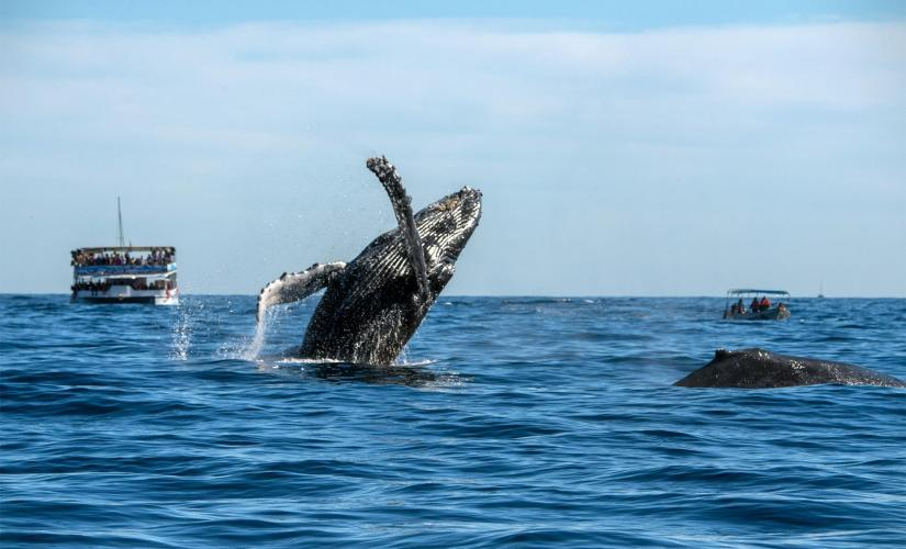 Waikiki Whale Watching Tour in Oahu