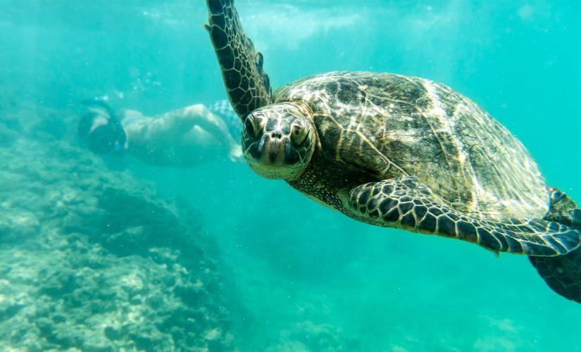 Sail and Snorkel Adventure Tour in Oahu (Diamond Head and Waikiki)