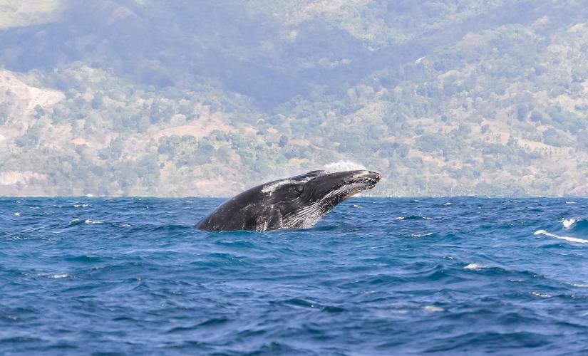 tahiti_whale_watching_tour.jpg