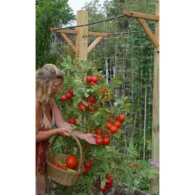 Ultimate vegetable trellis skyscraper garden free shipping for Vegetable garden pergola