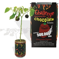 Challenge Chocolate Habanero Pepper Chili Plant