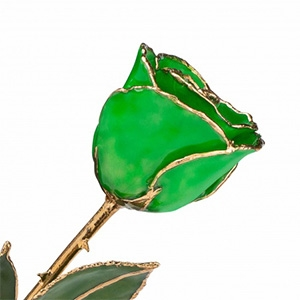 Deep Green Preserved and Gold Rose