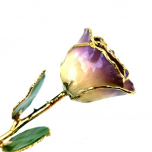 Purple Two-Toned and Gold Rose
