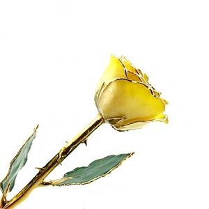 Yellow Two-Toned and Gold Dipped Rose