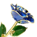 Dark Blue Gold Trim Rose - A beautiful rose for someone special
