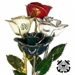 Armed Forces Patriotic Military Rose - Choose Colors and Add Optional Personalization