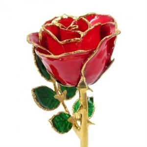 8 Inch Petite Preserved Rose - Choice of Styles and Accessories