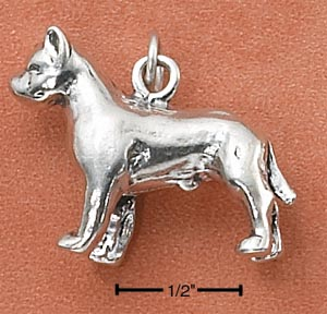 American Staffordshire Terrier Charm