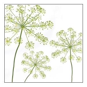 Dill 1