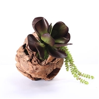 Succulent in Wood Sphere