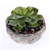 Succulents in a Cement Bowl