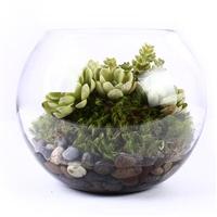 Bubble Glass Succulent Planter