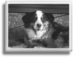 B&W Pet Rectangle Ceramic Picture