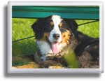 Color Pet Rectangle Ceramic Picture