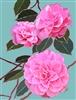 PINK CAMELLIAS