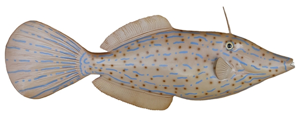 filefish fishmount