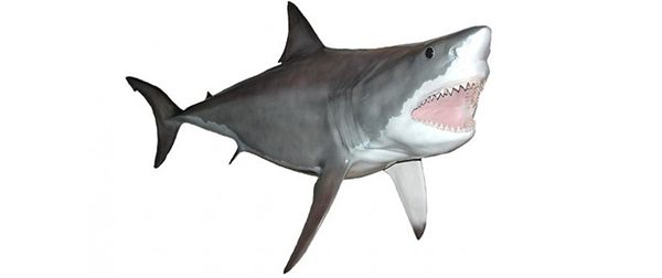 great white shark fishmount