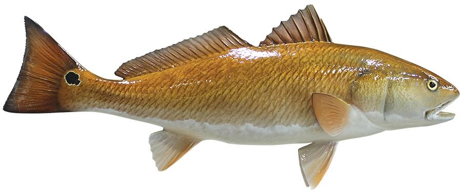Fish Tour