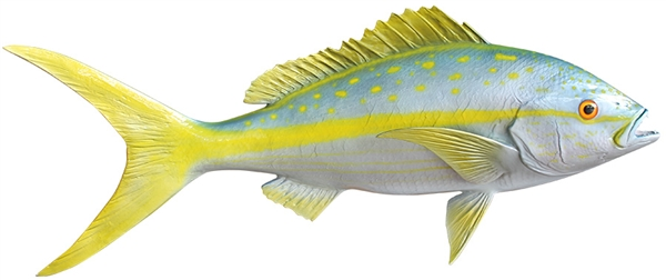yellowtail snapper fishmount
