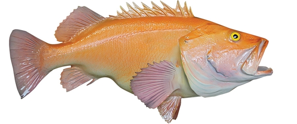 yellow eye rockfish fishmount
