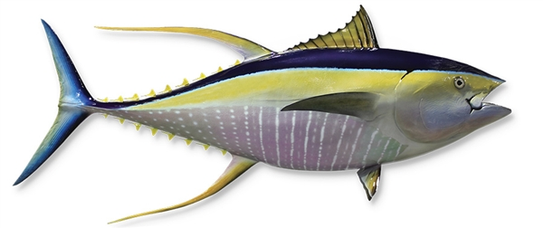 yellow fin tuna fishmount