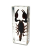 Black Scorpion Paperweight