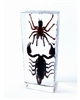 Black Scorpion and Tarantula Block Paperweight