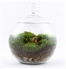 Uncharted Territory Readymade Terrarium