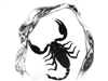 Large Scorpion Paperweight