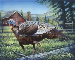 Wild Turkey By Robert Andrea