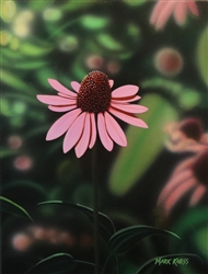 Coneflower By Mark Kness