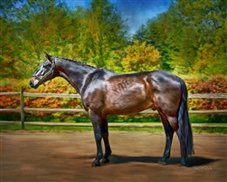 Blue Blood - Thoroughbred horse by Lois Stanfield