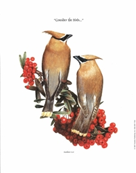 Consider the Birds Cedar Waxwings - Clarence Stewart