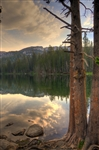 Mamie Lake Trees Mammoth California
