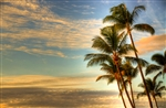 Palm Trees Sunrise Whaler