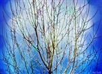 Bare Tree in Crystal Blue by Hal Halli