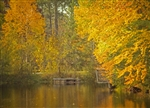 Autumn at the Pond by Hal Halli